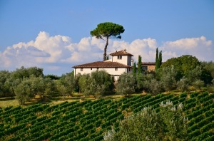 A scenic house in Tuscany surrounded by vineyards and olives.